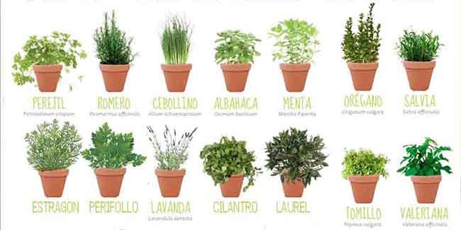 C mo y cu ndo plantar arom ticas en casa - Plantas de interior aromaticas ...