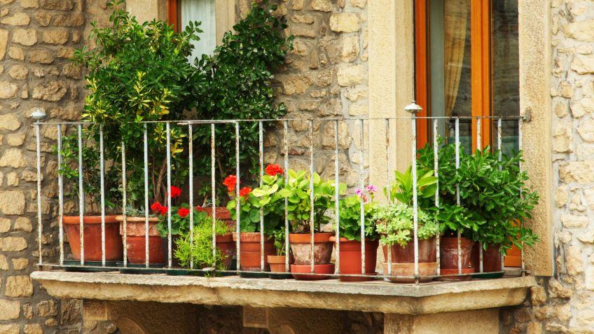 Plantas en balcon